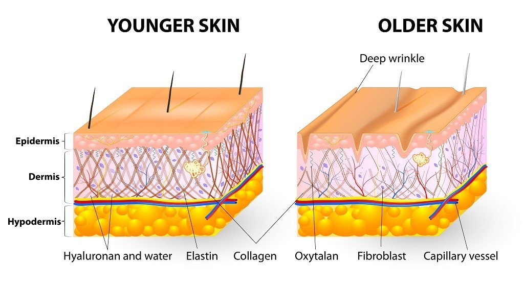 More Effective Collagen Synthesis